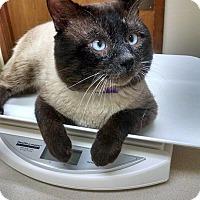 Adopt A Pet :: Buster - Walla Walla, WA