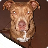 Adopt A Pet :: Honey - Oberlin, OH