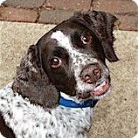 Adopt A Pet :: Kipton - Minneapolis, MN