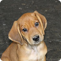 Adopt A Pet :: Spidey - PENDING, in Maine - kennebunkport, ME