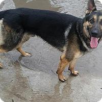 Adopt A Pet :: Jax - Fort Worth, TX