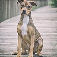 Adopt A Pet :: Ivy - Webster, TX