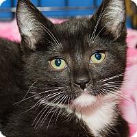 Adopt A Pet :: Scampi - Irvine, CA
