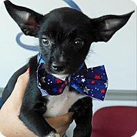 Adopt A Pet :: Felix - Topeka, KS