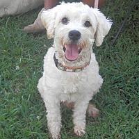 Adopt A Pet :: Leo - Clarksville, TN