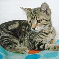Adopt A Pet :: Cash - Rochester, IN