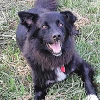 Adopt A Pet :: Erica - Eldora, IA