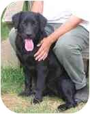 Labrador Retriever Mix Puppy for adoption in Avon, New York - Guppy