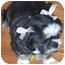 Photo 3 - Shih Tzu Dog for adoption in Inman, South Carolina - Chelsea