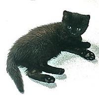 Adopt A Pet :: Sonia - Victor, NY