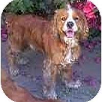 Adopt A Pet :: Freckles - dewey, AZ