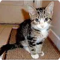 Adopt A Pet :: Jovi - Arlington, VA