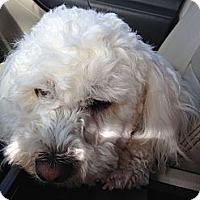 Adopt A Pet :: Winston - Alliance, NE