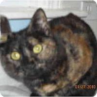 Adopt A Pet :: Cookie - Riverside, RI