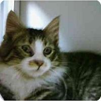 Adopt A Pet :: Scott - Maywood, NJ