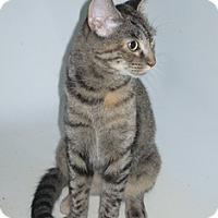 Adopt A Pet :: MorningGlory - Port Republic, MD