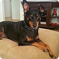 Adopt A Pet :: Asher - Scottsdale, AZ