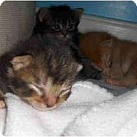 Adopt A Pet :: Colby - Richmond, VA