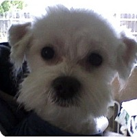 Adopt A Pet :: Jasper - Rancho Cordova, CA