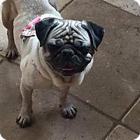 Adopt A Pet :: Khaleesi - Poway, CA