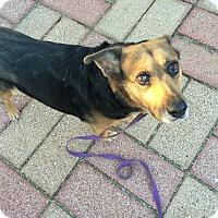 Adopt A Pet :: Philomena - Scottsdale, AZ