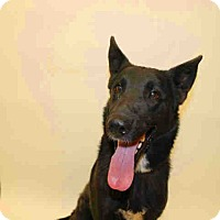 Adopt A Pet :: Pawla - Tracy, CA