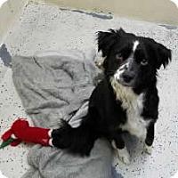 Adopt A Pet :: Angel - Avon, NY