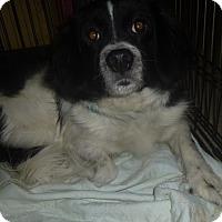 Adopt A Pet :: Kyna - Glastonbury, CT