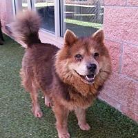 Adopt A Pet :: Fiesta - San Antonio, TX