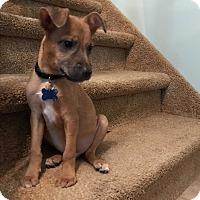 Adopt A Pet :: Mick - Middlesex, NJ