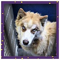 Adopt A Pet :: Bruce - San Jacinto, CA