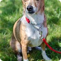 Adopt A Pet :: Tom - Salem, OR