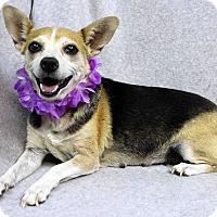 Adopt A Pet :: Lonnie - Westminster, CO