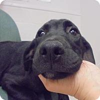 Adopt A Pet :: Duggie - Gulfport, MS