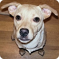Labrador Retriever Mix Dog for adoption in Centerville, Tennessee - Rickey