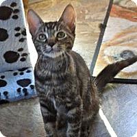Adopt A Pet :: Enya - Escondido, CA