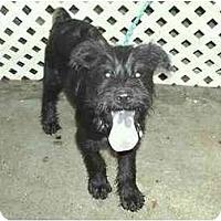Adopt A Pet :: Trevor - Houma, LA