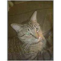 Adopt A Pet :: Ziggy - Owasso, OK
