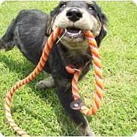 Adopt A Pet :: Kenneson - Adamsville, TN