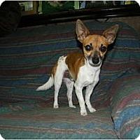 Adopt A Pet :: Wee Man - Mt Gretna, PA