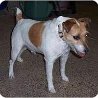 Adopt A Pet :: MAC - Phoenix, AZ