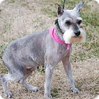 Adopt A Pet :: Belle - Providence, RI