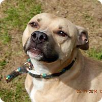 Adopt A Pet :: Ella - Lapeer, MI