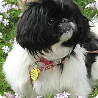 Adopt A Pet :: KoKo - Richmond, VA