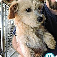 Adopt A Pet :: Tank - Kimberton, PA
