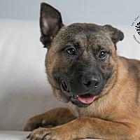 Adopt A Pet :: Loki - Inglewood, CA