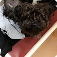 Adopt A Pet :: Coby - Philadelphia, PA