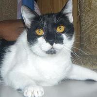 Adopt A Pet :: Oreo 2 - St. Thomas, VI