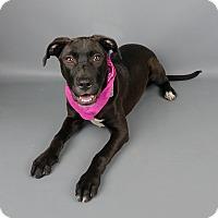 Adopt A Pet :: Nelly - Columbia, IL
