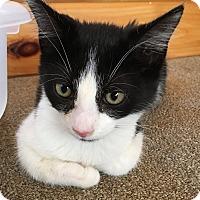 Adopt A Pet :: Ruby & Jade - Salem, NH